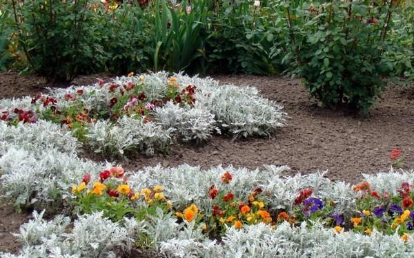 Растения против ос