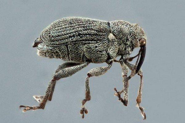 Тело насекомого покрыто волосинками