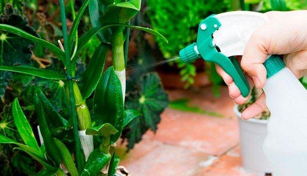 Обработка растения инсектицидом