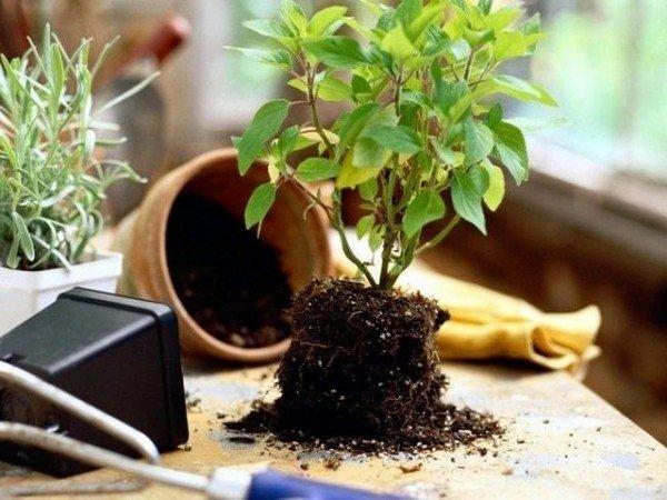 Субстрат для домашних растений