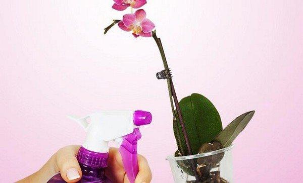 Обработка орхидеи