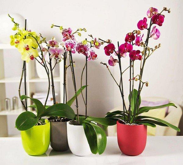 Здоровые цветы