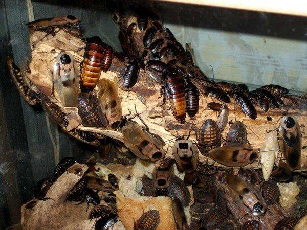 Экзотические насекомые