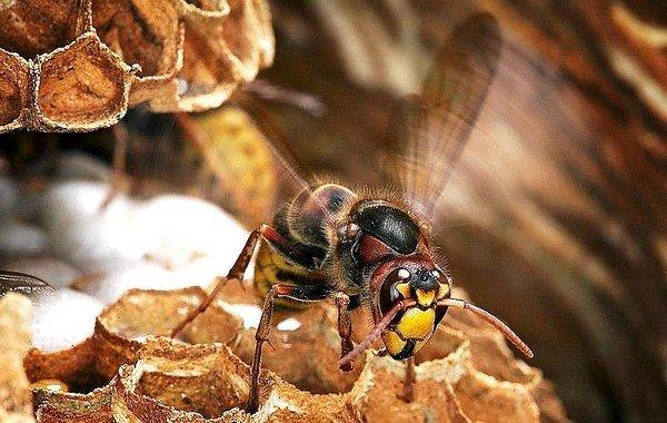 Главный враг этих насекомых - человек