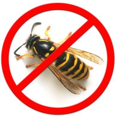 Чтобы осы не беспокоили