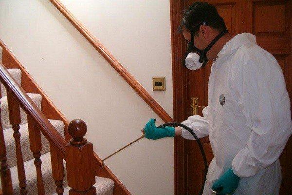 Борьба с паразитами в доме