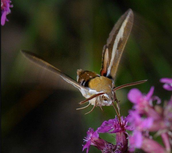 Удивительное насекомое
