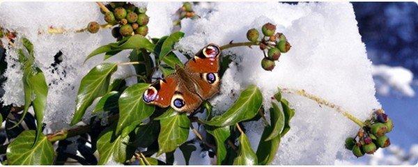 Ранняя бабочка