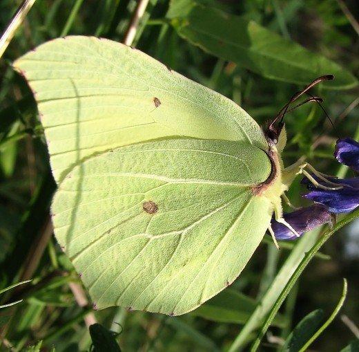 Бабочка любит свет