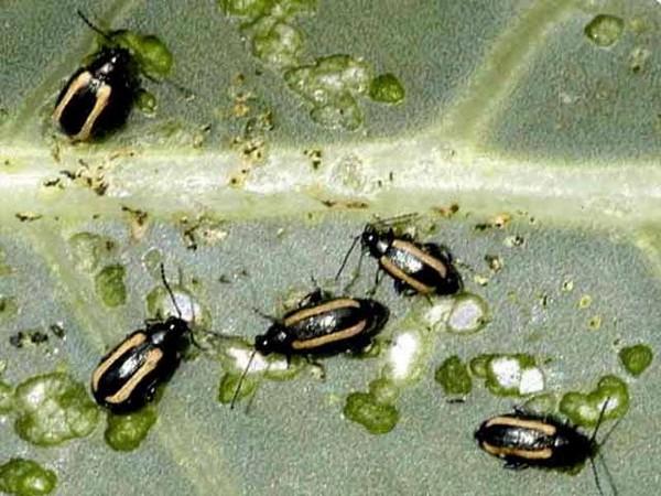 Питание жуков