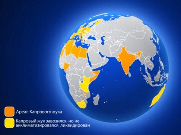 Жук обитает в разных странах