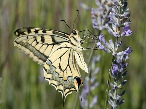 Бабочка обедает
