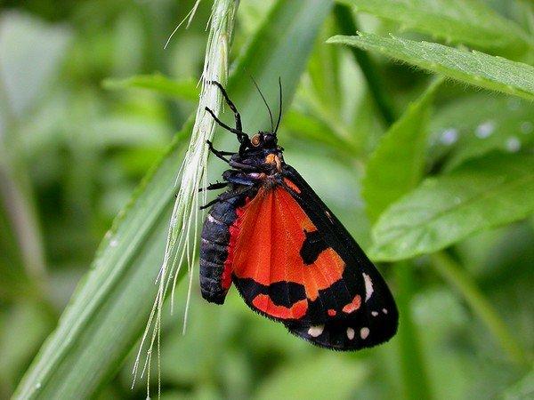 Бабочка питается