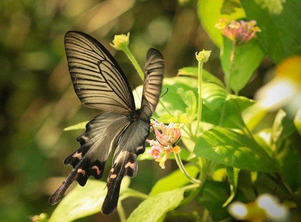 Потрясающее создание природы