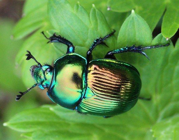 Симпатичный жук