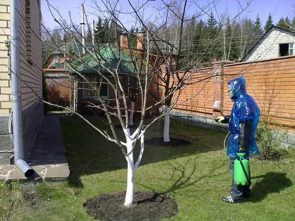 Защита дерева от вредителей
