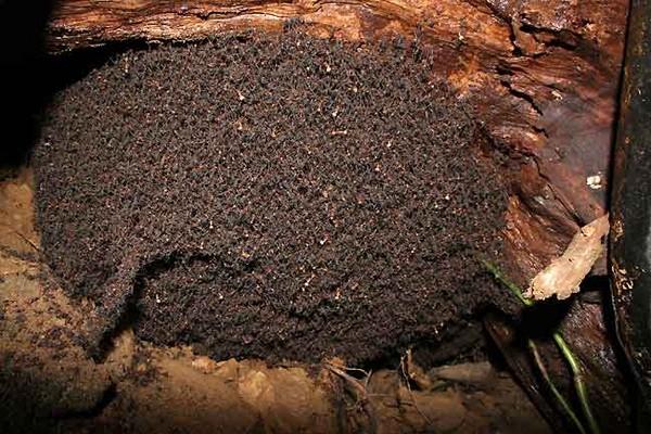 Временный муравейник кочевников