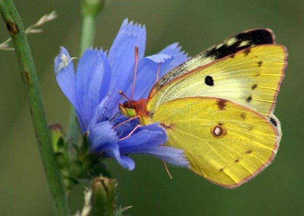 Небольшая желтая бабочк