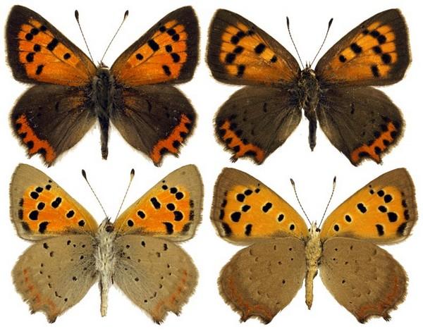 Бабочки крупным планом