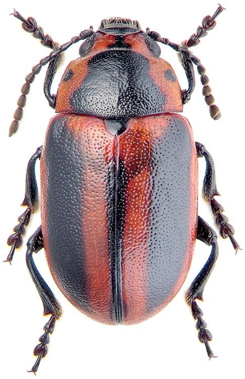 Вредоносный жук