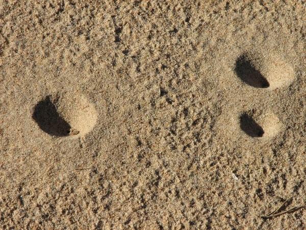 Воронки на песке