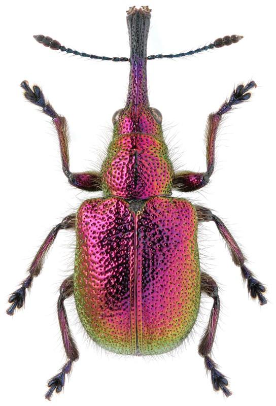 Яркий жук