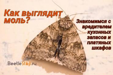 Фото моли, отличительные характеристики видов и особенности биологии    Какие виды моли бывают