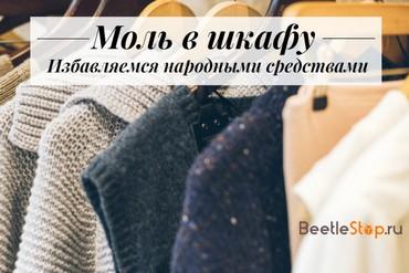 Век моли не видать. Кто грозит уничтожить белгородские каштаны и как их спасти. Новости общества