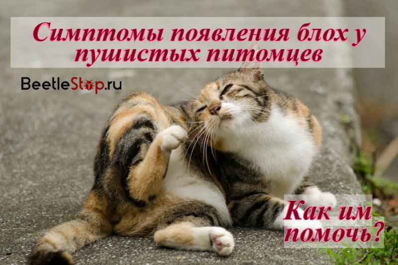 Блохи у кошек