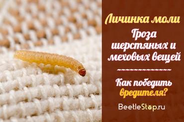 Как выглядит гусеница моли