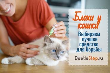 Хорошие средства от блох для кошек