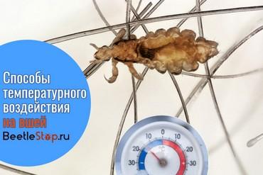 При какой температуре погибают вши и гниды, гибнут их яйца при минусовой стирке
