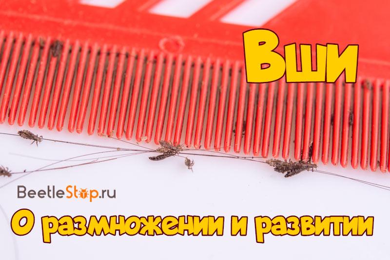 Как размножаются вши
