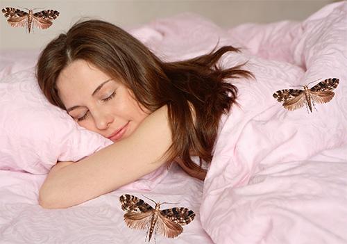 К чему снится моль во сне женщине