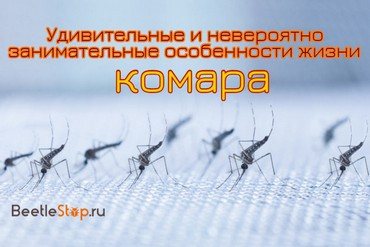 Комар насекомое. Образ жизни и среда обитания комара