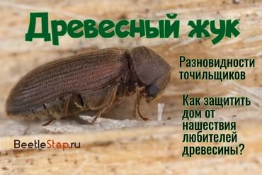 Как избавиться от древесного жука в квартире