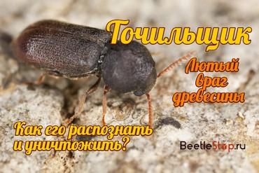 Как вывести жука точильщика