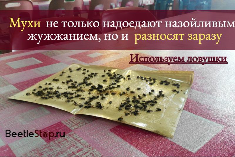 Агита от мух - инструкция по применению средства, цена и отзывы