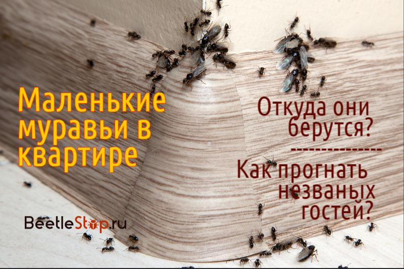 Маленькие муравьи