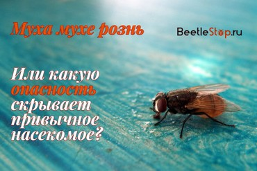 Чем опасны личинки мух