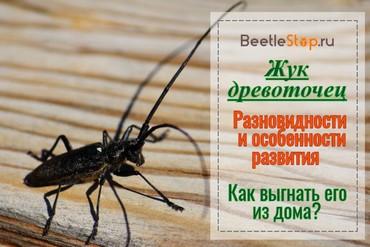 Средство от жука точильщика
