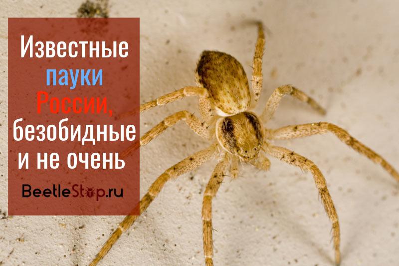 Пауки России