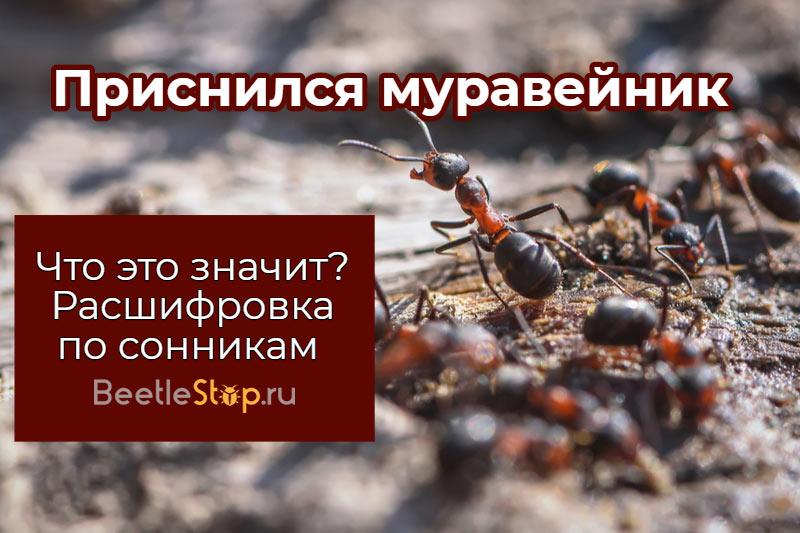 Сон о доме трудолюбивых муравьев