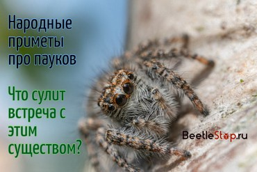 К чему появляется паук в квартире, приметы и суеверия