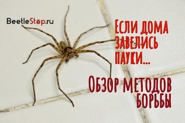 Как выгнать пауков из дома