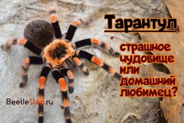 Где живут разные пауки-птицееды: место обитания тарантула