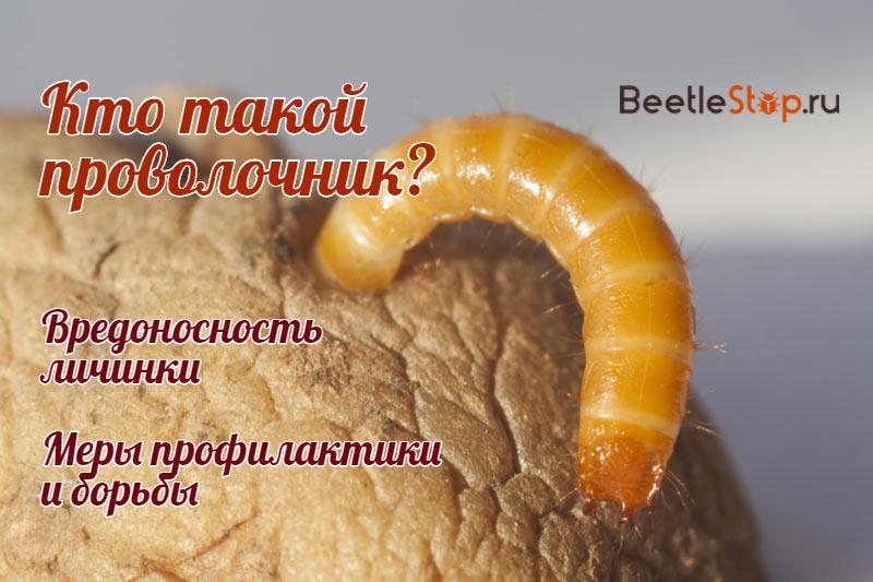 Вредоносная личинка