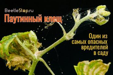 Растения против паутинного клеща