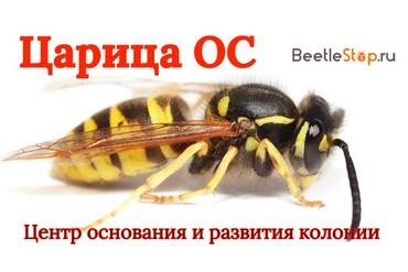 Матка осы и её основные функции