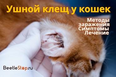 Лечение ушного клеща у кошки симптомы лечение профилактика